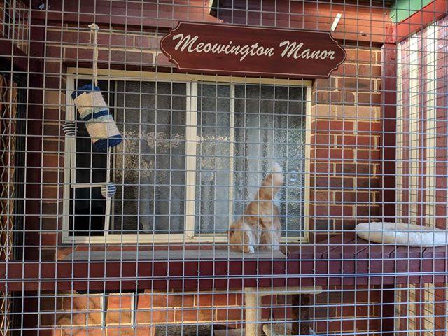 Meowington Manor 2